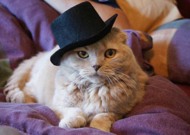 31-Gatos-mais-elegantes-e-estilosos-do-mundo-Blog-Animal (15)