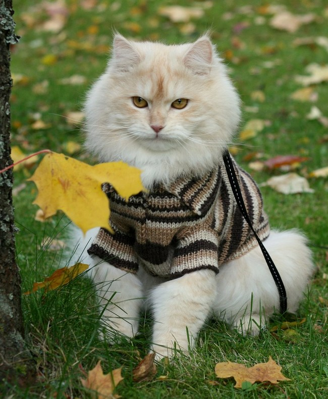 31-Gatos-mais-elegantes-e-estilosos-do-mundo-Blog-Animal (22)
