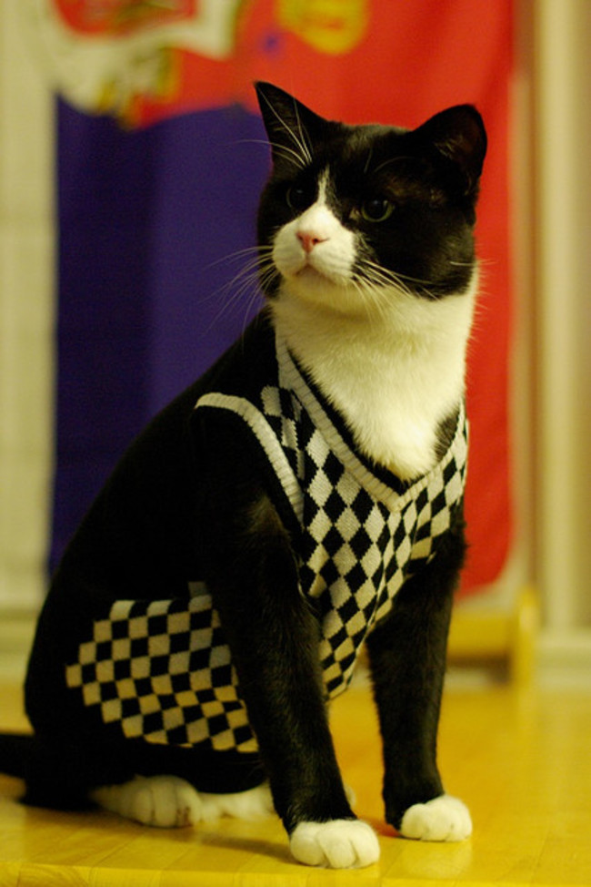 31-Gatos-mais-elegantes-e-estilosos-do-mundo-Blog-Animal (4)