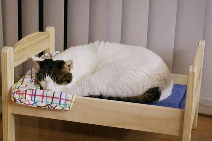 Camas de bonecas transformadas em camas para gatos (1)