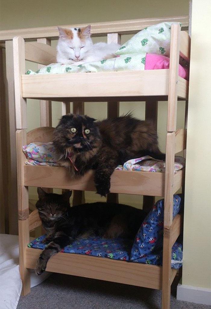 Camas de bonecas transformadas em camas para gatos blog for Cama para gatos
