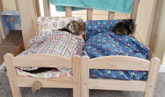 Camas de bonecas transformadas em camas para gatos (12)