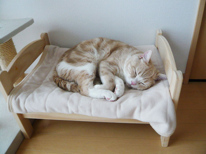Camas de bonecas transformadas em camas para gatos (13)