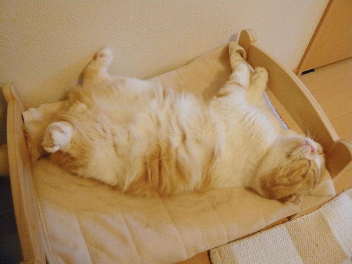 Camas de bonecas transformadas em camas para gatos (15)
