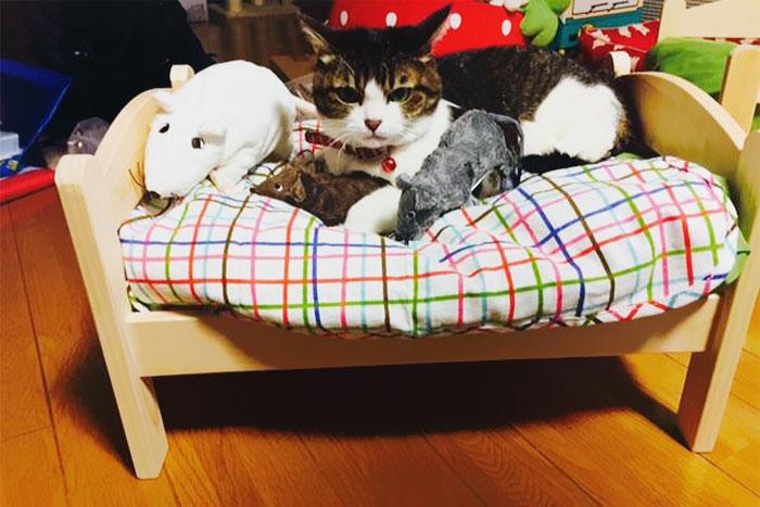 Camas de bonecas transformadas em camas para gatos (2)