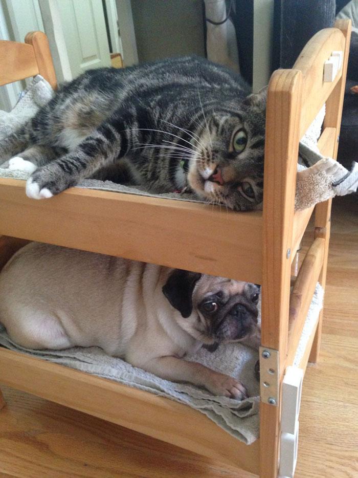 Camas de bonecas transformadas em camas para gatos (7)