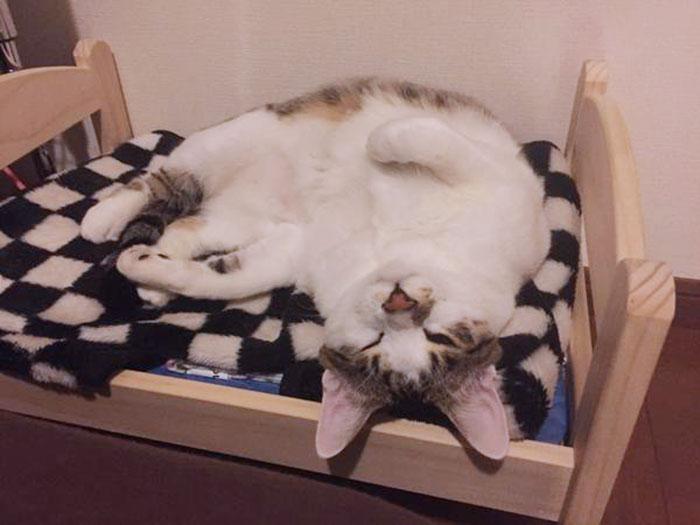 Camas de bonecas transformadas em camas para gatos (8)