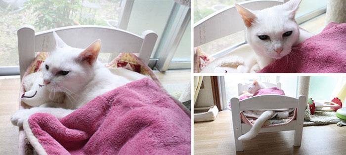 Camas de bonecas transformadas em camas para gatos (9)