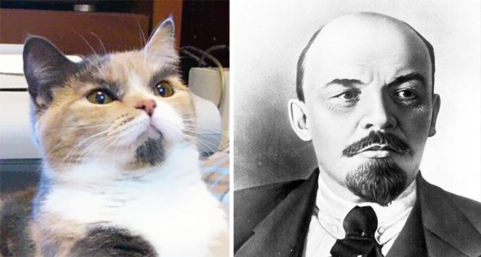 Gatos que se parecem com outras coisas (12)