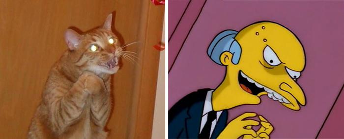 Gatos que se parecem com outras coisas (14)