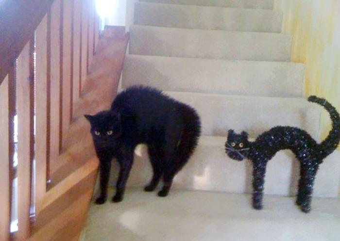 Gatos que se parecem com outras coisas (16)