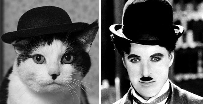 Gatos que se parecem com outras coisas (20)
