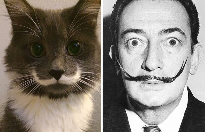 Gatos que se parecem com outras coisas (24)