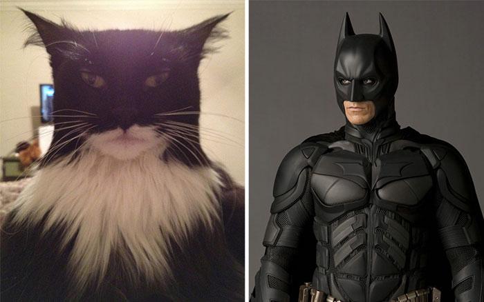 Gatos que se parecem com outras coisas (34)