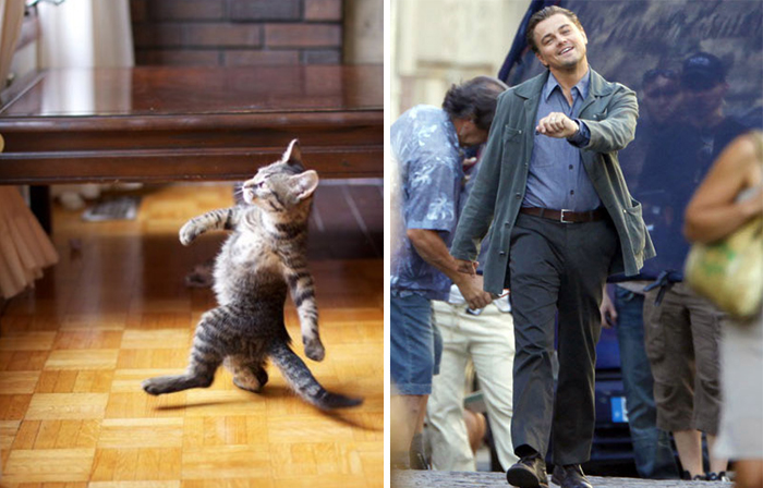 Gatos que se parecem com outras coisas (4)
