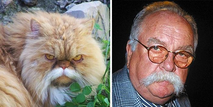 Gatos que se parecem com outras coisas (6)