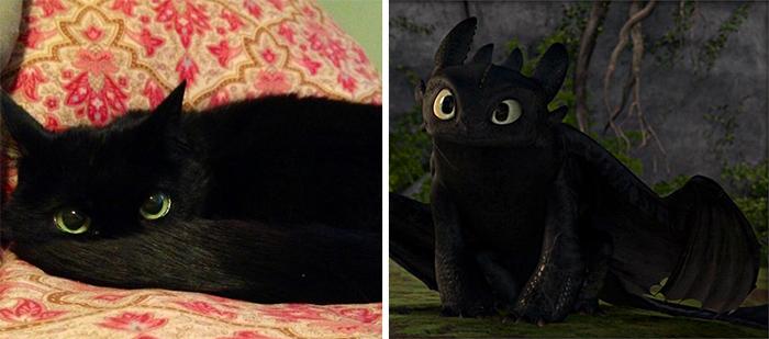 Gatos que se parecem com outras coisas (8)