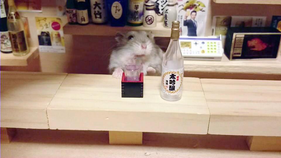 Hamster barman servindo mini alimentos e bebidas (18)