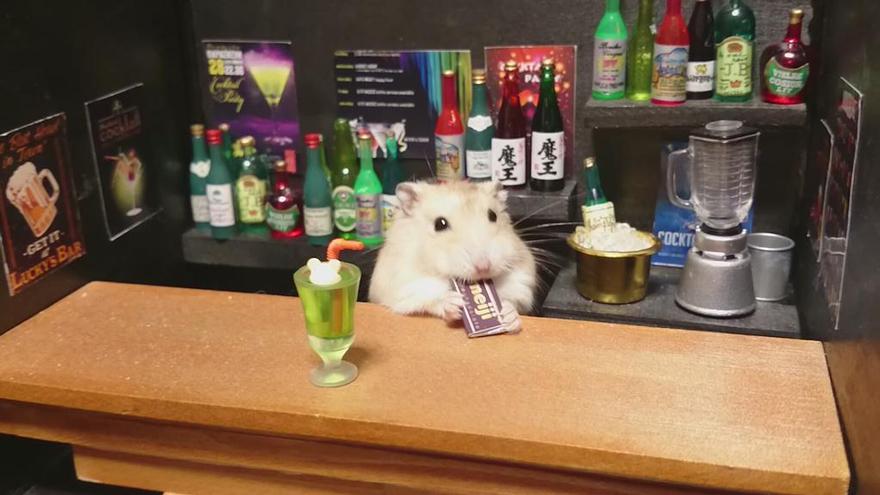 Hamster barman servindo mini alimentos e bebidas (19)