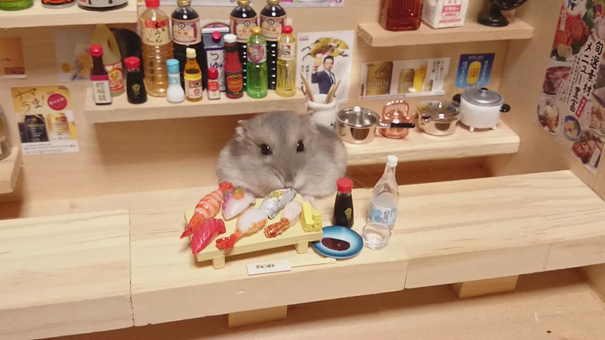 Hamster barman servindo mini alimentos e bebidas (3)
