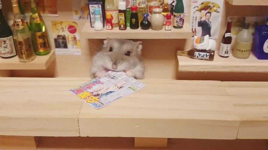 Hamster barman servindo mini alimentos e bebidas (7)