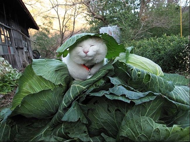 Os-Gatos-Mais-Famosos-da-Internet-Blog-Animal (1)
