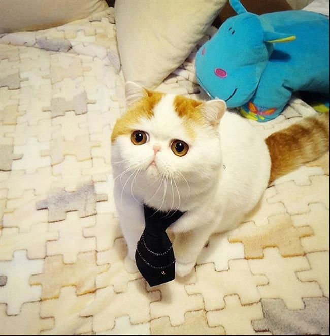 Os-Gatos-Mais-Famosos-da-Internet-Blog-Animal (15)