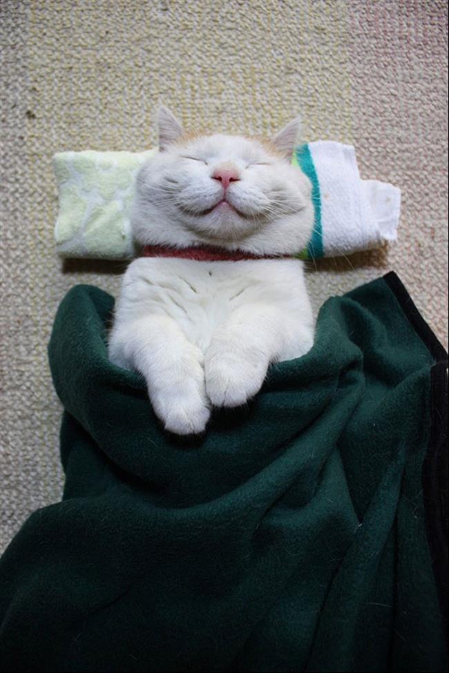 Os-Gatos-Mais-Famosos-da-Internet-Blog-Animal (2)