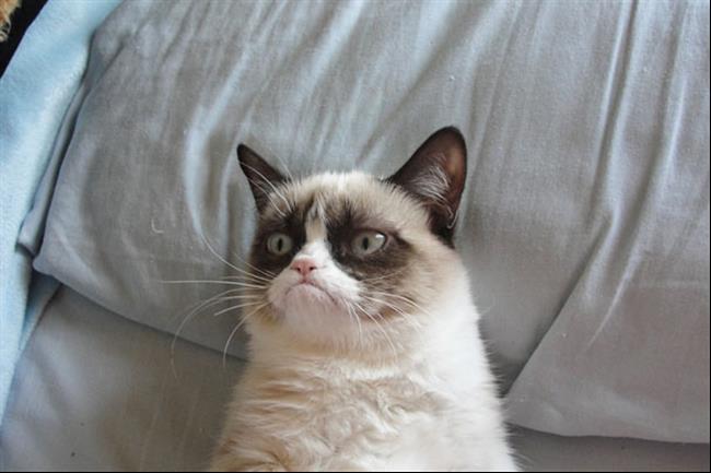Os-Gatos-Mais-Famosos-da-Internet-Blog-Animal (25)