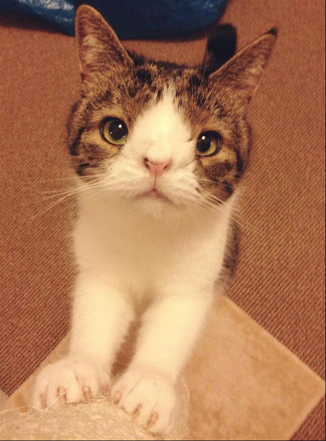 Os-Gatos-Mais-Famosos-da-Internet-Blog-Animal (26)