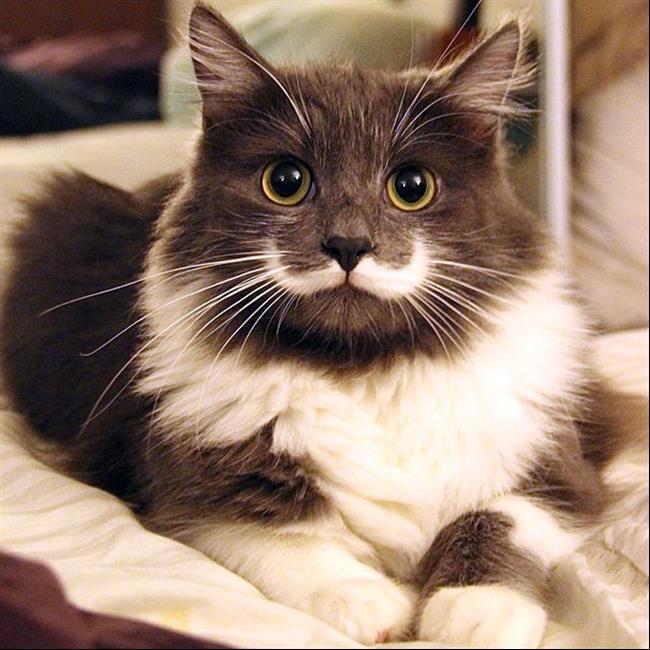 Os-Gatos-Mais-Famosos-da-Internet-Blog-Animal (29)