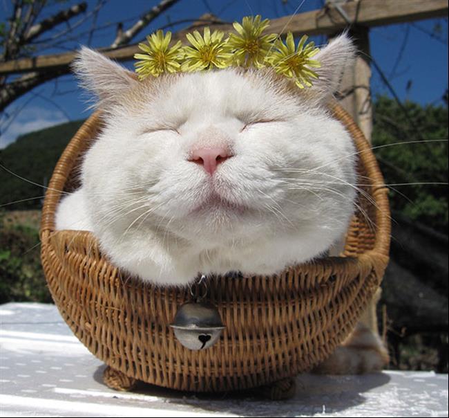 Os-Gatos-Mais-Famosos-da-Internet-Blog-Animal (3)