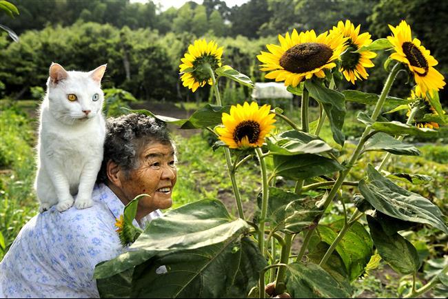 Os-Gatos-Mais-Famosos-da-Internet-Blog-Animal (31)