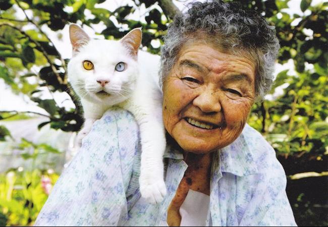 Os-Gatos-Mais-Famosos-da-Internet-Blog-Animal (32)