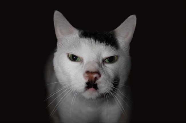 Os-Gatos-Mais-Famosos-da-Internet-Blog-Animal (33)