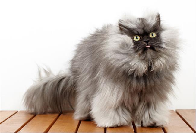 Os-Gatos-Mais-Famosos-da-Internet-Blog-Animal (35)