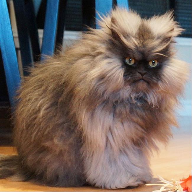 Os-Gatos-Mais-Famosos-da-Internet-Blog-Animal (36)