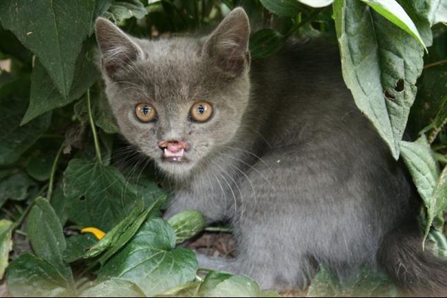Os-Gatos-Mais-Famosos-da-Internet-Blog-Animal (43)