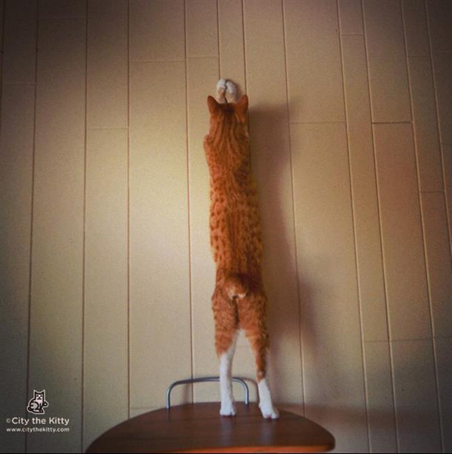 Os-Gatos-Mais-Famosos-da-Internet-Blog-Animal (45)