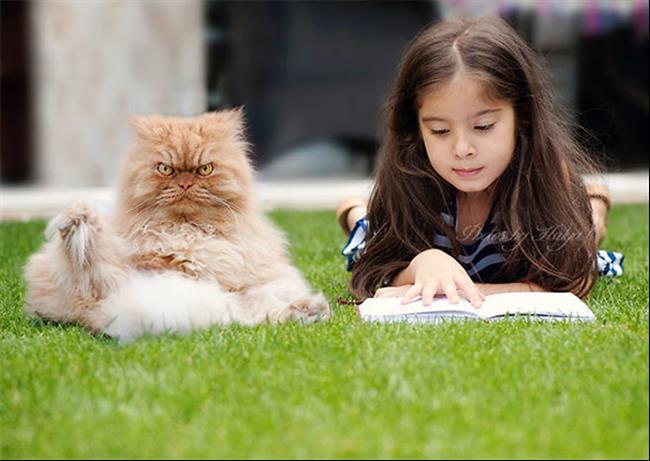 Os-Gatos-Mais-Famosos-da-Internet-Blog-Animal (6)