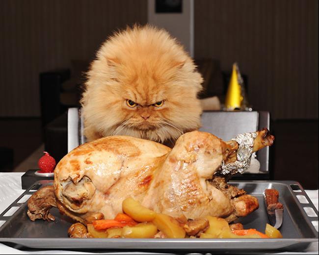 Os-Gatos-Mais-Famosos-da-Internet-Blog-Animal (7)