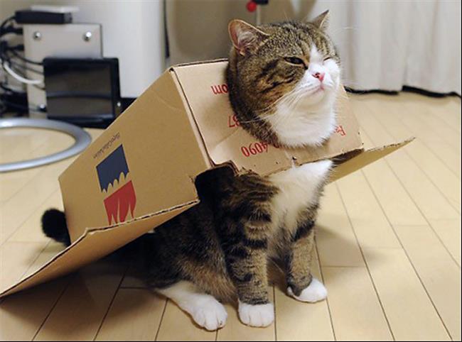 Os-Gatos-Mais-Famosos-da-Internet-Blog-Animal (8)