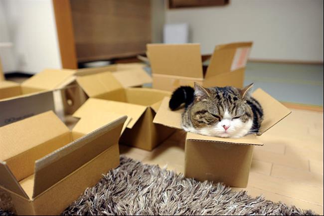 Os-Gatos-Mais-Famosos-da-Internet-Blog-Animal (9)