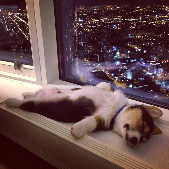 25-Animais-com-sono-que-realmente-estavam-precisando-dormir-urgentemente (3)