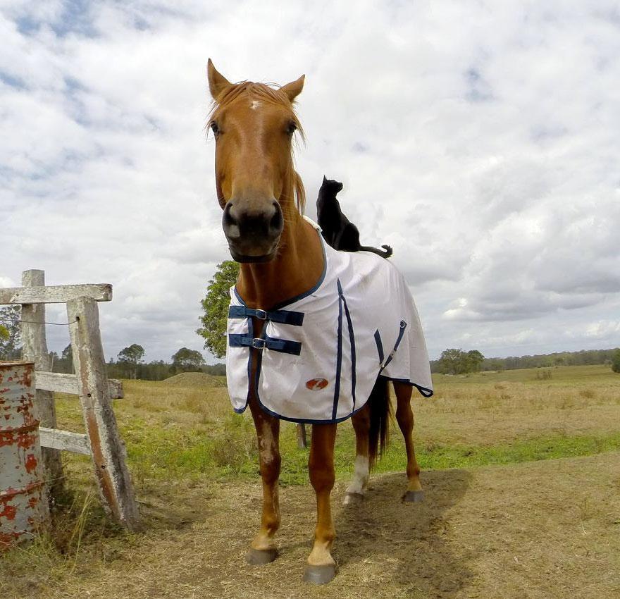 Este gato adora andar a cavalo (1)