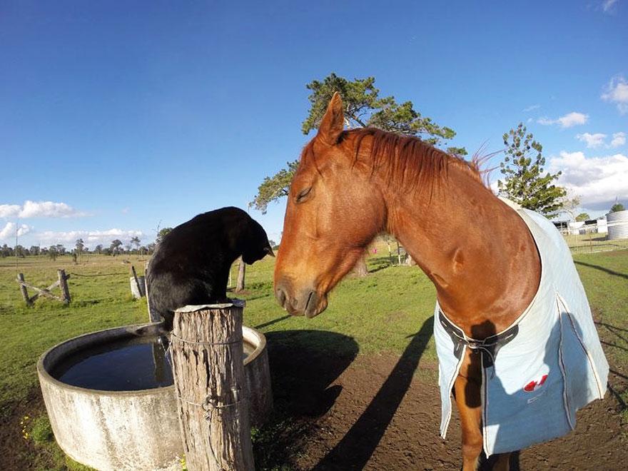 Este gato adora andar a cavalo (2)