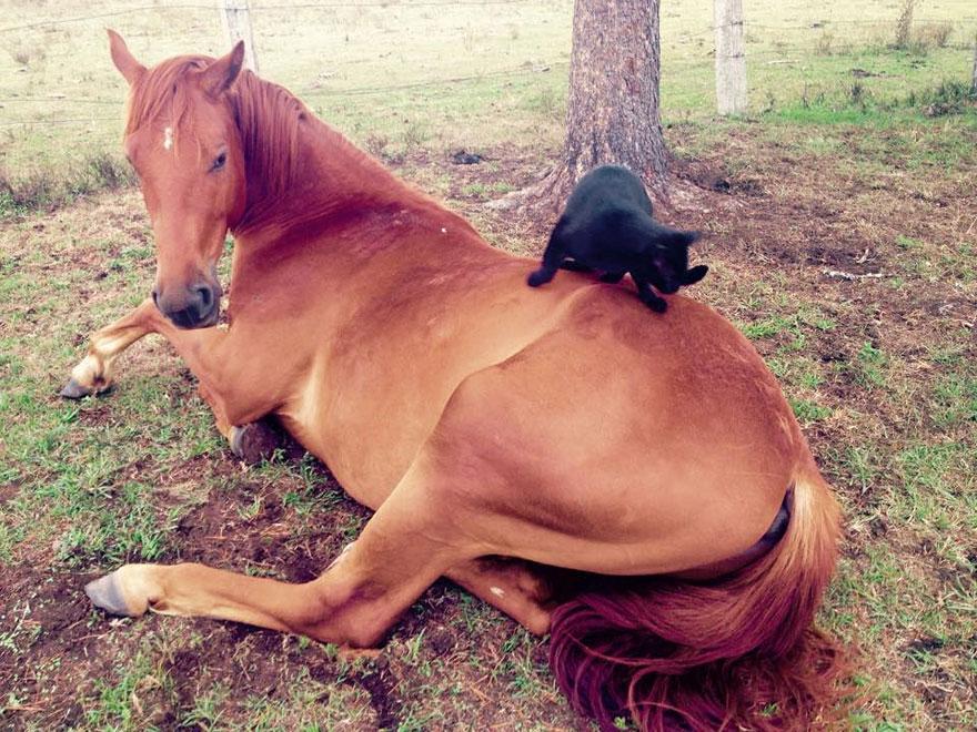 Este gato adora andar a cavalo (3)