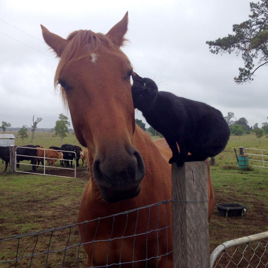 Este gato adora andar a cavalo (4)