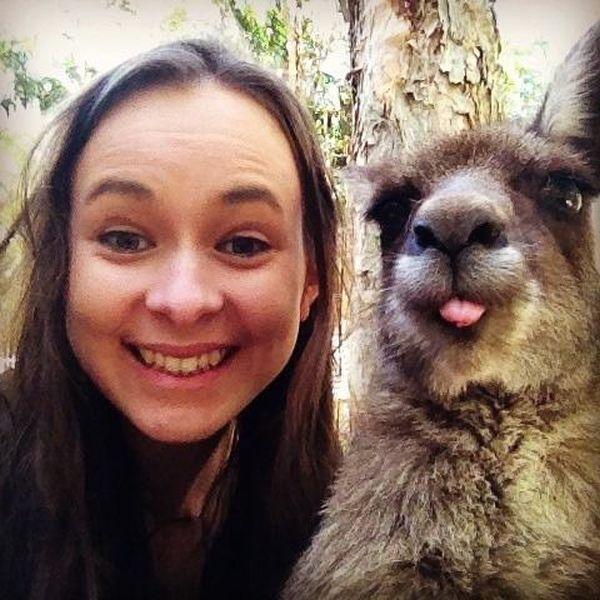Estes animais apenas querem tirar uma Selfie 11 These animals just want to take a Selfie