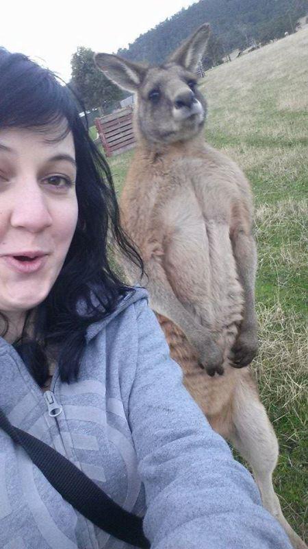 Estes animais apenas querem tirar uma Selfie 14 These animals just want to take a Selfie